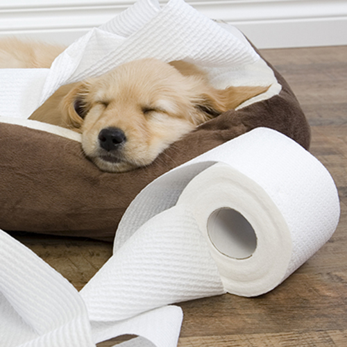 A Cheat Sheet to Puppy Proof Your Home