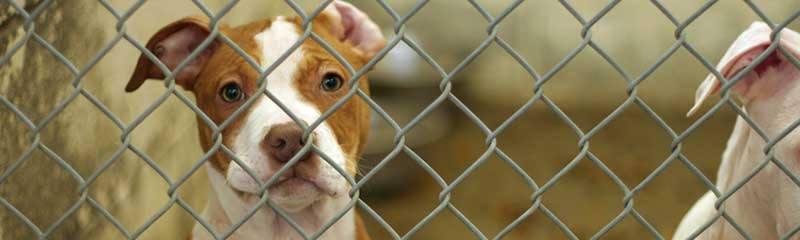 Save a Life at a New Jersey Animal Shelter